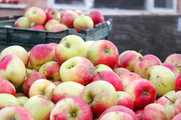 apple-crates